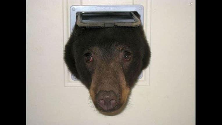 00ea9625-bear through door_1439757104300.JPG