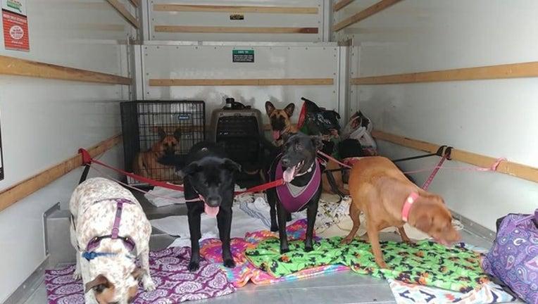 449f3a45-dog_rescue_1536962583586-403440.jpg