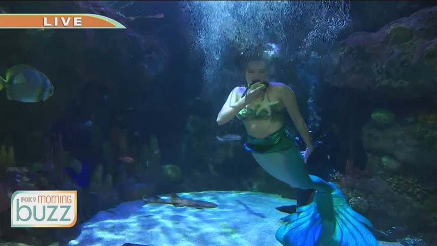 Mermaids swimming at SEA LIFE at Mall of America during October