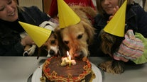 Researchers say there's a more accurate way to calculate your dog's age in human years