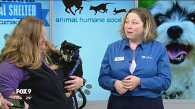 National Animal Shelter Appreciation Week: How do animal shelters determine breeds?
