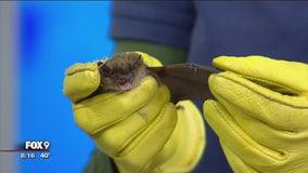 Minnesota Bat Festival kicks off in Bloomington