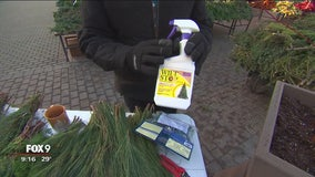 Dale K explores winter gardening containers