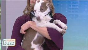 National Animal Shelter Appreciation Week: How to make sure you pick the right pet for your family