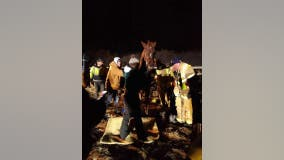 Community rallies to rescue horse after it fell on ice
