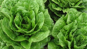 Officials: Don't eat romaine grown in Salinas, California