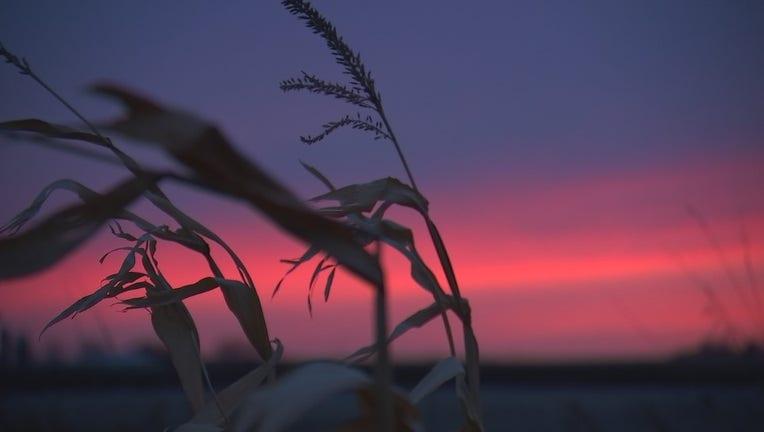 Sunset on a farm