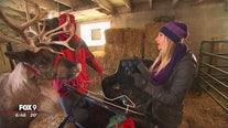 Reindeer farm keeps Glencoe family busy