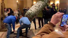 Christmas tree returns to Minnesota State Capitol for holiday season