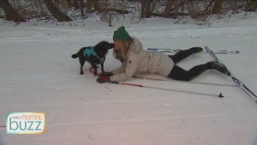 FOX 9 reporter's dog causes skijoring wipeout