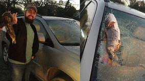 Catfish smashes into car windshield after getting dropped by flying bird