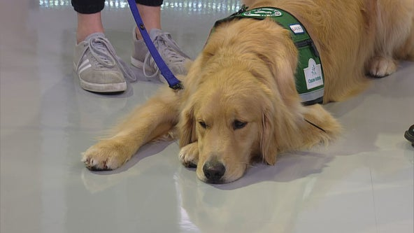 New service dog joins ranks at M-Health Fairview University of Minnesota Masonic Children's Hospital
