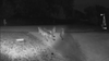 'Extraordinary': Rare video shows 5 mountain lions together in California