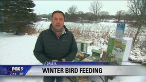 Dale K gives tips on winter bird feeding