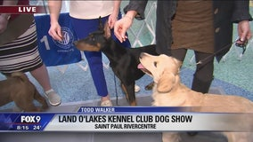 Puppies at Land O'Lakes Dog Show in St. Paul, Minnesota