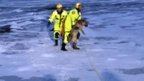 Bloomington firefighters rescue dog from icy Minnesota River