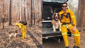 Koala-sniffing dog aids in 15 wildlife rescues as Australian bushfires ravage habitats