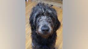 Family heartbroken after dog dies from ingesting meth hidden in fast food bag