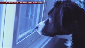 Minneapolis musician creates music video featuring rescue dogs up for adoption