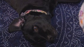 Concern over proposed changes for traveling with emotional support animals