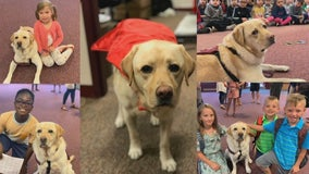 Lakeville school resource dog loses leg in cancer surgery, set to return to class later this month