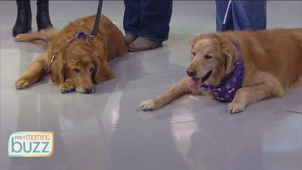 A celebration of all things canine: Doggie Depot returns to Union Depot