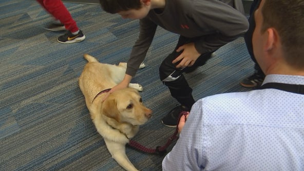 Seamus the school resource dog returns to work after losing leg to cancer