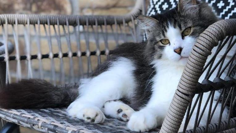 A cat stolen from its home in Carver County, Minnesota