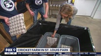 Insect farm in St. Louis Park offers cricket-based snacks