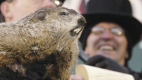 Punxsutawney Phil does not cast shadow, predicts early spring