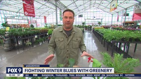 Dale K's tips on fighting winter blues with fresh greenery