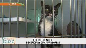 CatVideoFest lands in Minneapolis