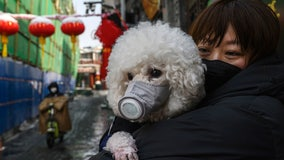 Dog tests 'weak positive' for coronavirus in Hong Kong, first possible infection in pet