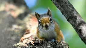 Squirrel causes power outage, affecting nearly 2,000 in central Minnesota