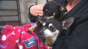 30 dogs arrive at Animal Humane Society after 4,000-mile road trip