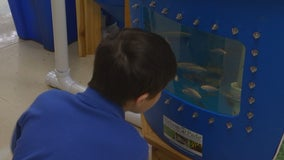 Elementary students learn about sustainable farming through aquaponics program
