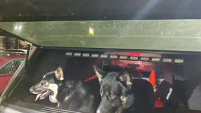 Minnesota state troopers use beef sticks to lure two dogs on I-94 to safety