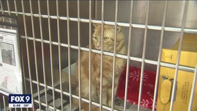 Animal Humane Society to close to the public through May