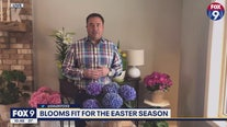 Garden Guy Dale K gives tips on maintaining your spring plants