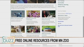 Getting your wildlife fix online - the Minnesota Zoo boosts free offerings amid closure