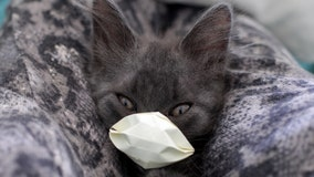2 cats in NY state test positive for virus