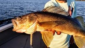 Minnesota Governor's Fishing Opener postponed to 2021
