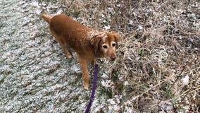 Quick bursts of snow push through Twin Cities metro Thursday morning