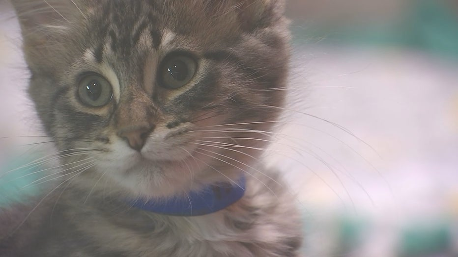 Animal Humane Society Slowly Starts Opening Back Up Pet Adoption Process
