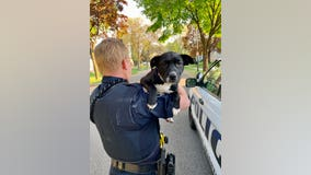 Police find stolen puppy that thief tried to sell in Inver Grove Heights, Minnesota
