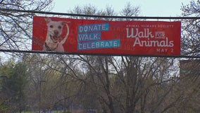 Animal Humane Society's 'Walk for Animals' will go on but from a distance