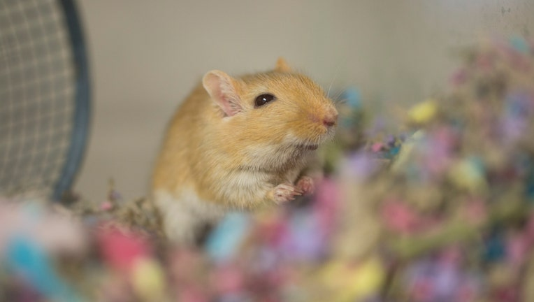 Animal Humane Society Hopes To Find Homes For More Pocket Pets