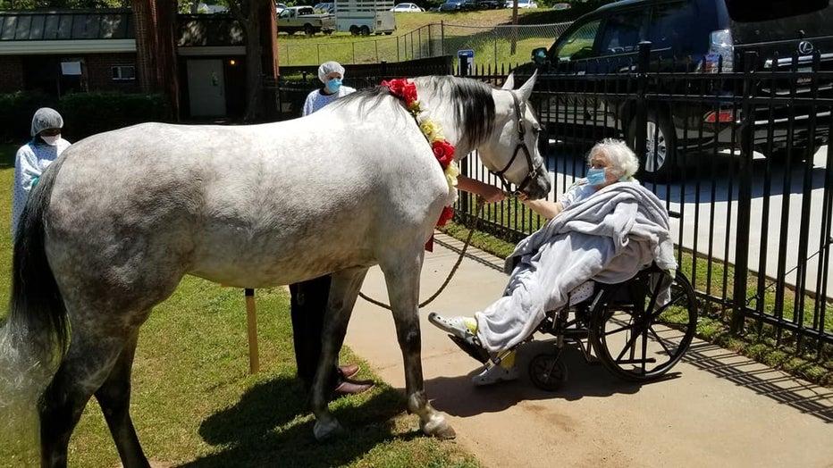 HorseVisit2.jpg