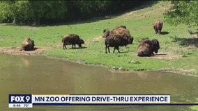 Minnesota Zoo opens drive-thru experience amid pandemic