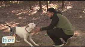 Pet owners turn to virtual dog training amid pandemic